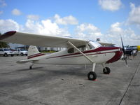 N1231D @ KSEF - 1950 C-170A - by MustangoRP