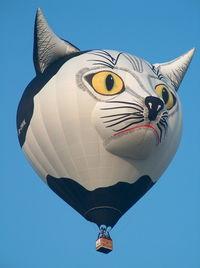 D-OMIK @ WARS - Nice cat - by ghans