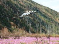 C-FZHK @ CYDA - Over Yukon Fireweed - by Erik Keyser