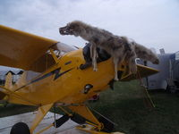 N99165 @ OSH - piper cub with a dead animal - by christian maurer