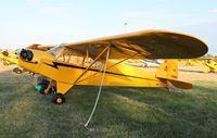 N70919 @ KOSH - Piper J3C-65 - by Mark Pasqualino