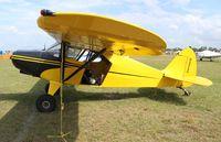 N5949H @ LAL - Piper PA-16
