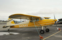 N4264V @ MRI - N4264V at Merrill Field airport AK