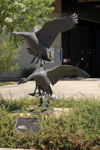 Wallops Flight Facility Airport (WAL) - Sculpture Canada Geese by David & William Turner at the NASA Visitor Center, Wallops Flight Facility, Wattsville, VA - by scotch-canadian