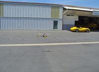 Santa Paula Airport (SZP) - T-REX radio-controlled helicopter, in flight (chasing the Ferrari?) - by Doug Robertson