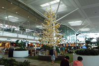 Brisbane International Airport, Brisbane, Queensland Australia (YBBN) - It is the beginning of the season - by Micha Lueck