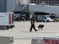 Boise Air Terminal/gowen Fld Airport (BOI) - Boise Police explosive detection dog training on the commercial ramp. - by Gerald Howard